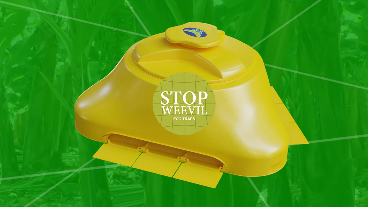Vicedo Martí desarrolla Stop Weevil, una trampa ecológica contra el Picudo Negro.